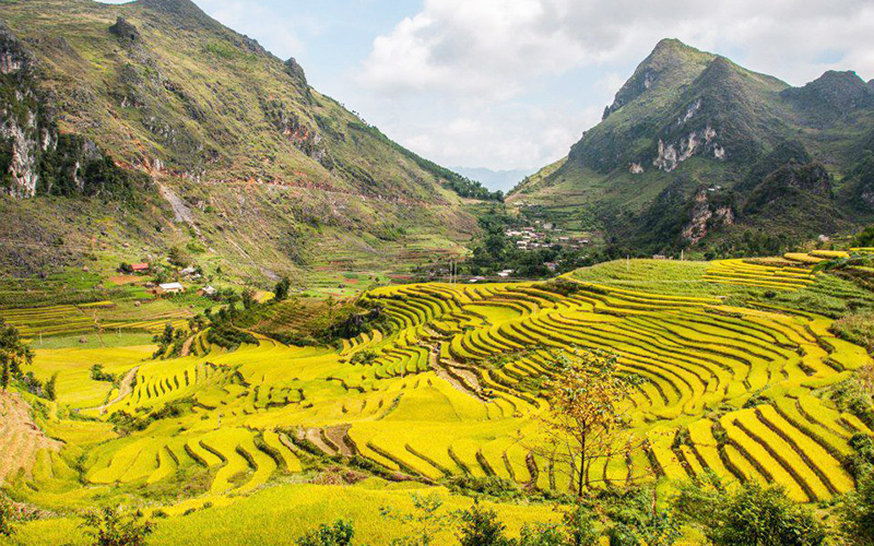 Rice Terraces in Ha Giang 2