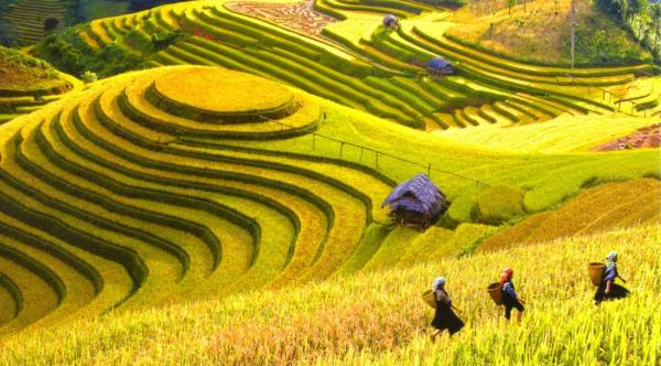 Sapa Hill Tribe Village Discovery Tour – 8 Days