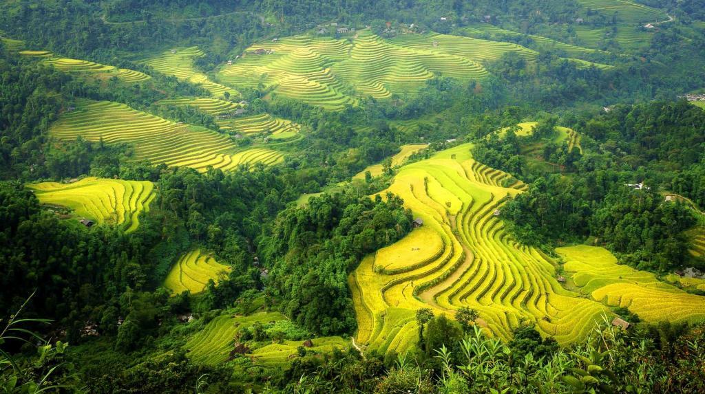 Hoang-su-phi-rice-terrace