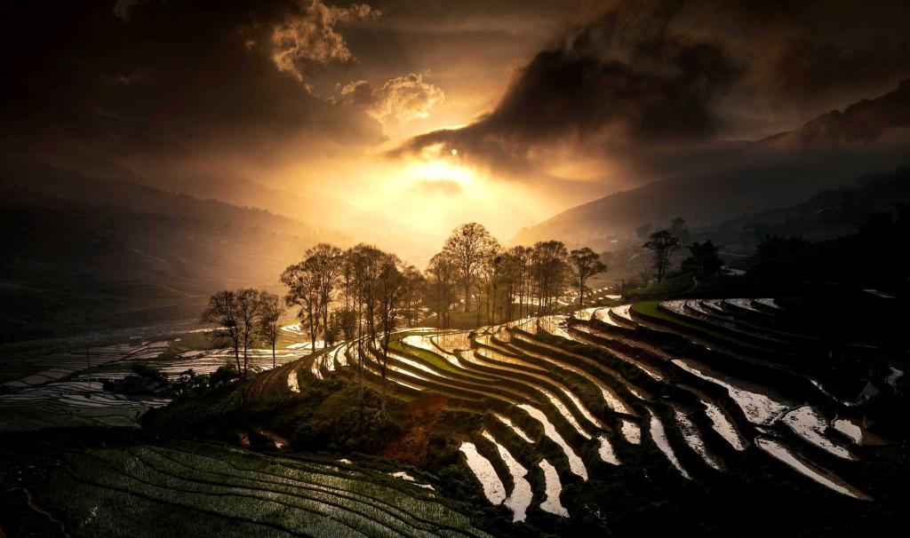 Sapa-rice-terrace